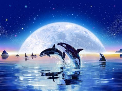 Whales and Dolphins - Fantasy & Abstract Background