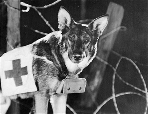 rin-tin-tin-dog-movies-photography2 - By - The eXiled